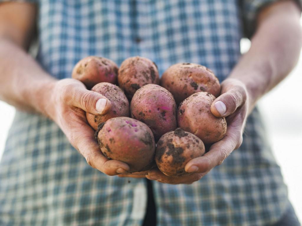 Obožavate krumpir, a izbjegavate ga zbog straha od debljanja? U krivu ste, može pomoći u regulaciji težine, a evo i kako ga je najbolje pripremiti