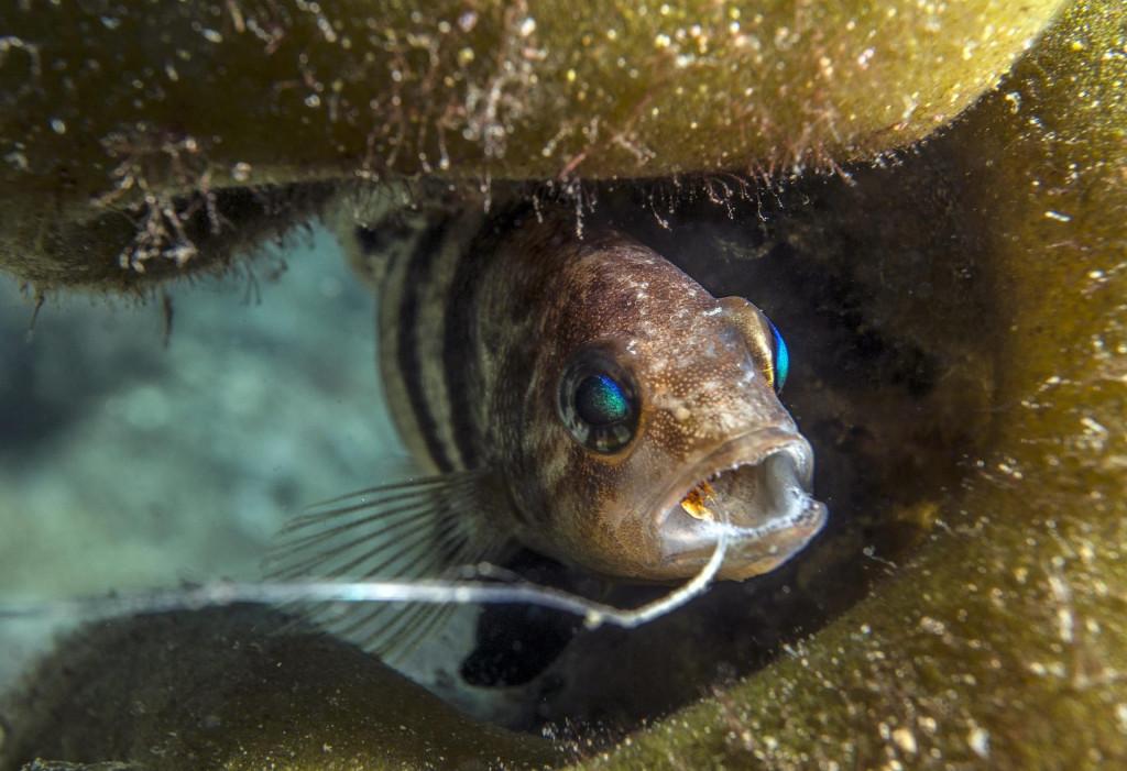 Riba s udicom u ustima