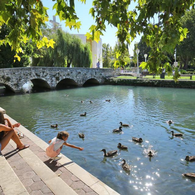 Gosti u Solinu rado hrane patke<br />