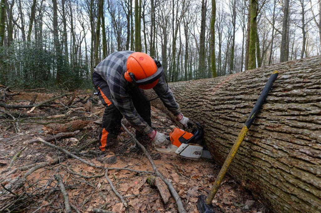 Prema podacima iz izvješća UN-a, Hrvatska je od 1990. godine do 2020. godine izgubila čak 23.000 hektara ljudskom rukom zasađene tj. gospodarene šume