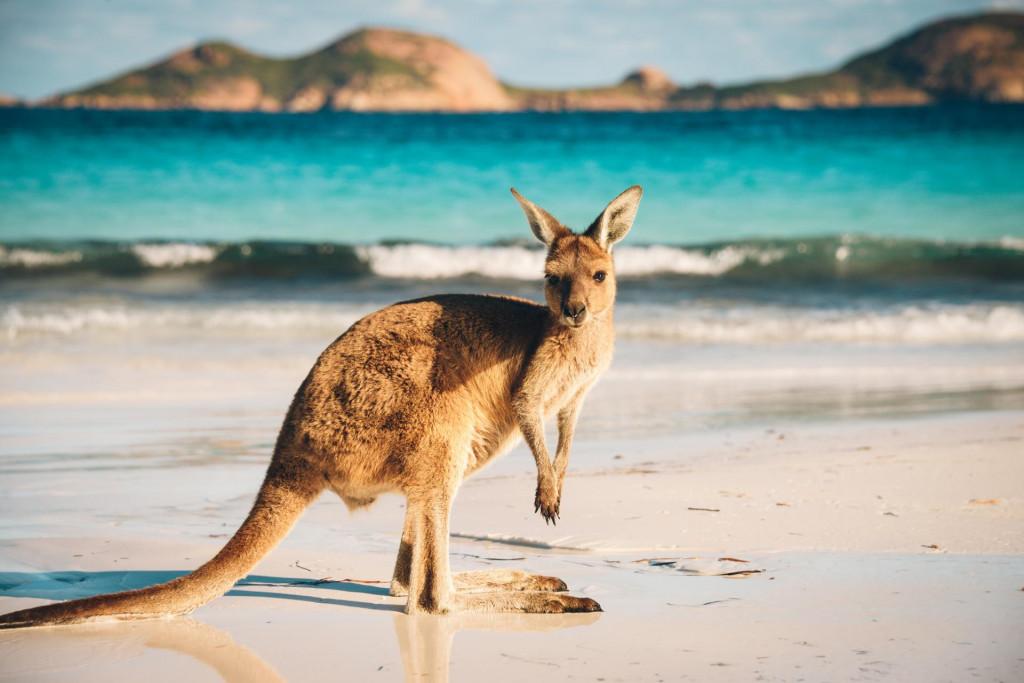 Klokanisu uobičajeneživotinje u ovom dijelu Australije.