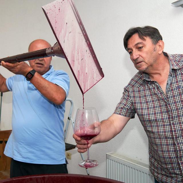 Vrenje mošta koji će se pretvoriti u vrhunsko vino vinara Dane Slamića
