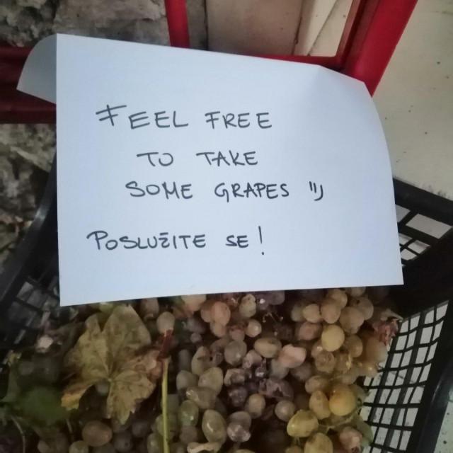 Besplatno grožđe u Ulici između Vrta