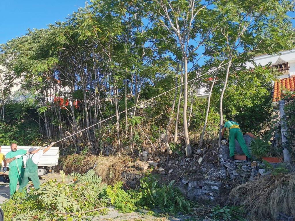 Djelatnici Vrtlara nadomak povijesne jezgre uklanjaju pajasen, stranu invazivnu biljnu vrstu