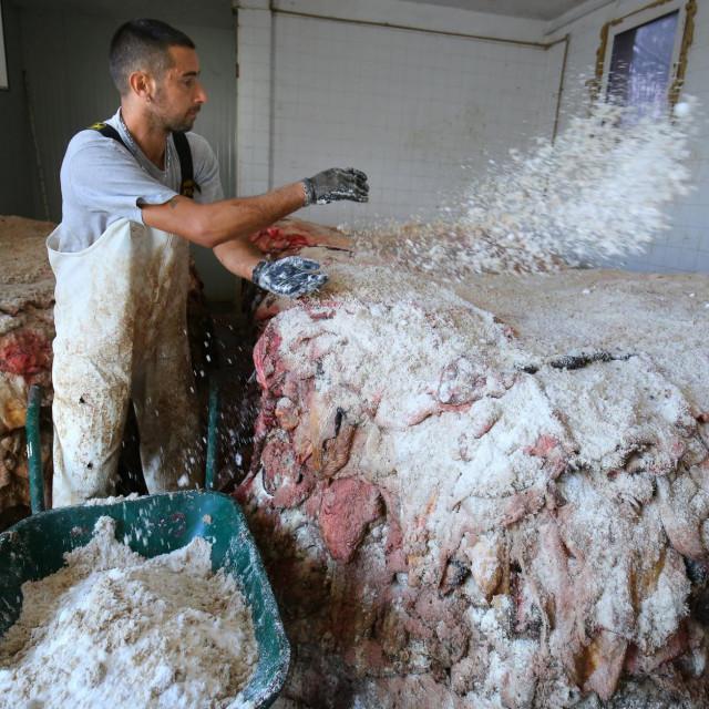'Svaku kožu treba posuti s najmanje dva kilograma soli i tako konzervirane ih skladištiti jednu na drugu', kaže drniški zet Ilija Čurepić