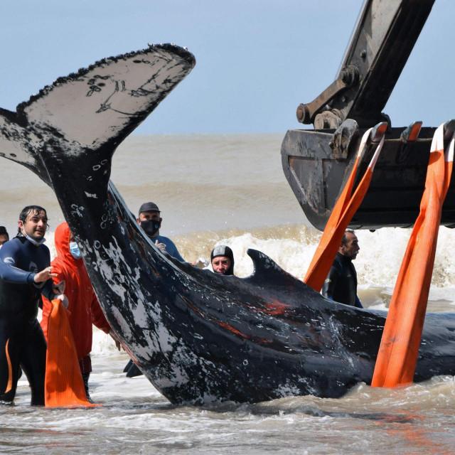 Spašavanje kitova u Argentini